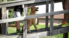 Young boy petting his pet dog on bridge - stock footage