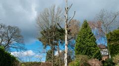 Arborist lumberjack felling tree time lapse 02 4K version Stock Footage
