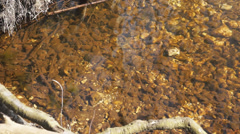 Stream in Castle Bottom SSSI Nature Reserve, Hampshire, England Stock Footage