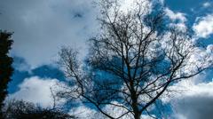Arborist lumberjack felling tree time lapse 01 Stock Footage