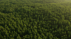 Aerial View: Mangrove forest in Krabi province, Thailand. Stock Footage