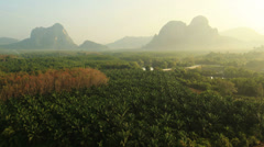 Aerial View: Palm oil plantation in Krabi province, Thailand Stock Footage