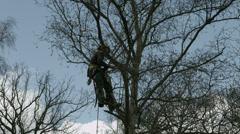 Arborist lumberjack in tree preparing to cut it down 4K Stock Footage