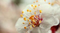 Dew On Flower Stock Footage