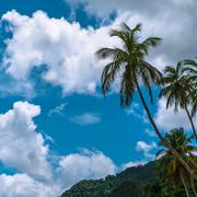 Tropical climate - Palm tree, clouds and blue sky. Trinidad and Tobago Stock Photos