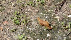 Slug Action Timelapse A Stock Footage