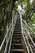 Stock Photo of steep stairs in the rainforest