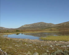 Heather and lichen covered arctic landscape + pan small lake or kettle hole Stock Footage