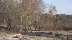 Castle Bottom SSSI Nature Reserve, Hampshire, England Stock Footage