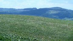 Cornfield landscape 01 Stock Footage