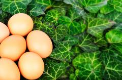 Group eggs on a background of green leaves Stock Photos