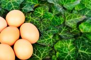 Stock Photo of Group eggs on a background of green leaves