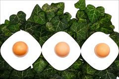 A series of three eggs and egg cups on a green background Stock Photos