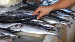 Large selection of fish and other seafood in market. Island Coron, Philippines - stock footage
