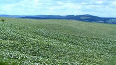 Cornfield landscape 02 Stock Footage