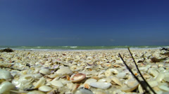 BEACH -  PICKING SHELLS  - CLOSE UP Stock Footage