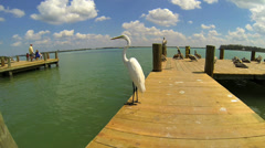 SNOWY EGRET ON DOCK - stock footage