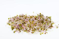 The healthy diet. fresh sprouts isolated on white background Stock Photos
