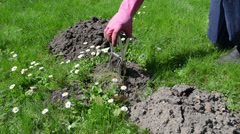 Gardener man check mole trap Stock Footage