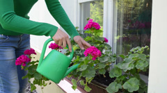 Careful woman with watering-can water flowers on window sill Stock Footage