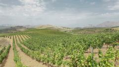 Italian vineyard - stock footage