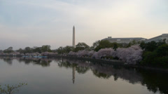Cherry blossom in Washington DC Stock Footage