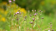 Wild flowers in the meadow, natural environment, close-up Stock Footage