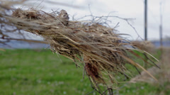 Straw caught on a fence from flood Stock Footage