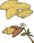 Stock Illustration of almond graphic