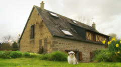 Shih-Tzu outside French cottage - dolly Stock Footage