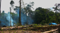 Clearcutting the Jungle. Amazon Jungle Fire. Burning jungle in South America. - stock footage
