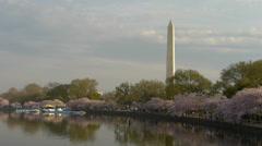 Cherry blossom in Washington DC Stock Footage