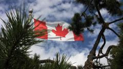 Flag Of Canada & Windy Pines Stock Footage