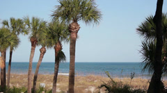 Palm Trees and Ocean in Hilton Head Island SC Stock Footage