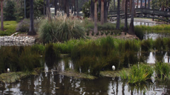 2.5K Los Angeles Echo Park Wetland with bridge in background Stock Footage
