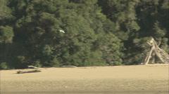 White Heron Flying Stock Footage