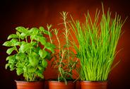 Stock Photo of basil, rosemary and chives