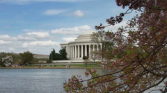 1224 Cherry Blossoms Jefferson Monument in DC Stock Footage