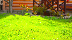 Kind of green lawn in front of house Stock Footage