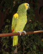 green parrott - stock photo