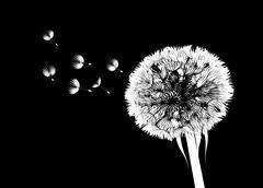 Dandelion flower Piirros