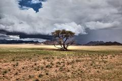 Desert storm with tree Stock Photos