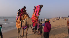 Indian people woman riding on camel in Puri beach, Odisha, India Stock Footage
