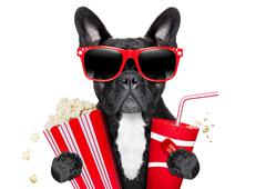 dog to the movies - stock illustration