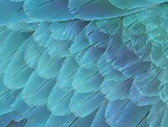 close up of blue and yellow macaw wing - stock photo