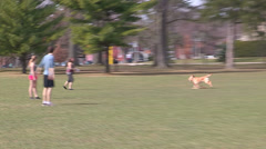 People and dog playing ulimate frisbee on campus Stock Footage