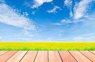 Stock Illustration of blue sky and green rice field with plank wood foreground
