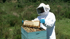 Producer extracting honey in the hive Stock Footage