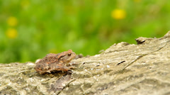 Toad frog Stock Footage
