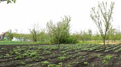 Vegetables salad garden ,organic vegetables Stock Footage